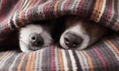 Tos y estornudos en nuestras mascotas
