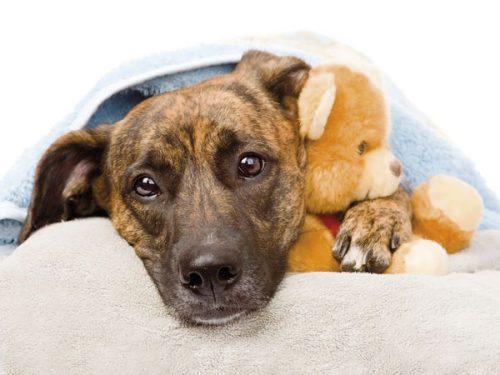 Parasitosis en los perros